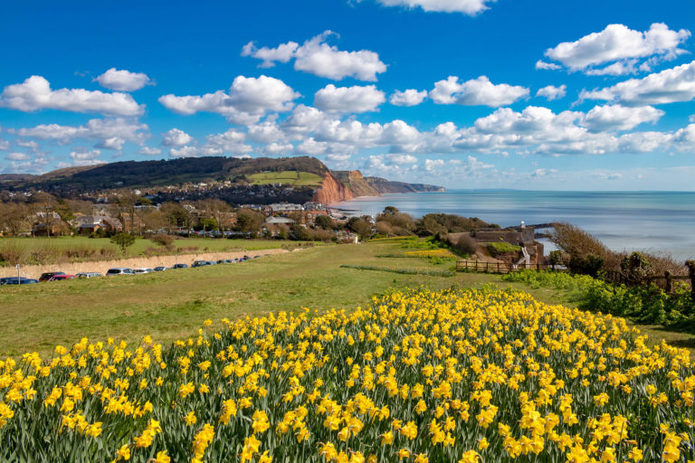 sidmouth boswell-2