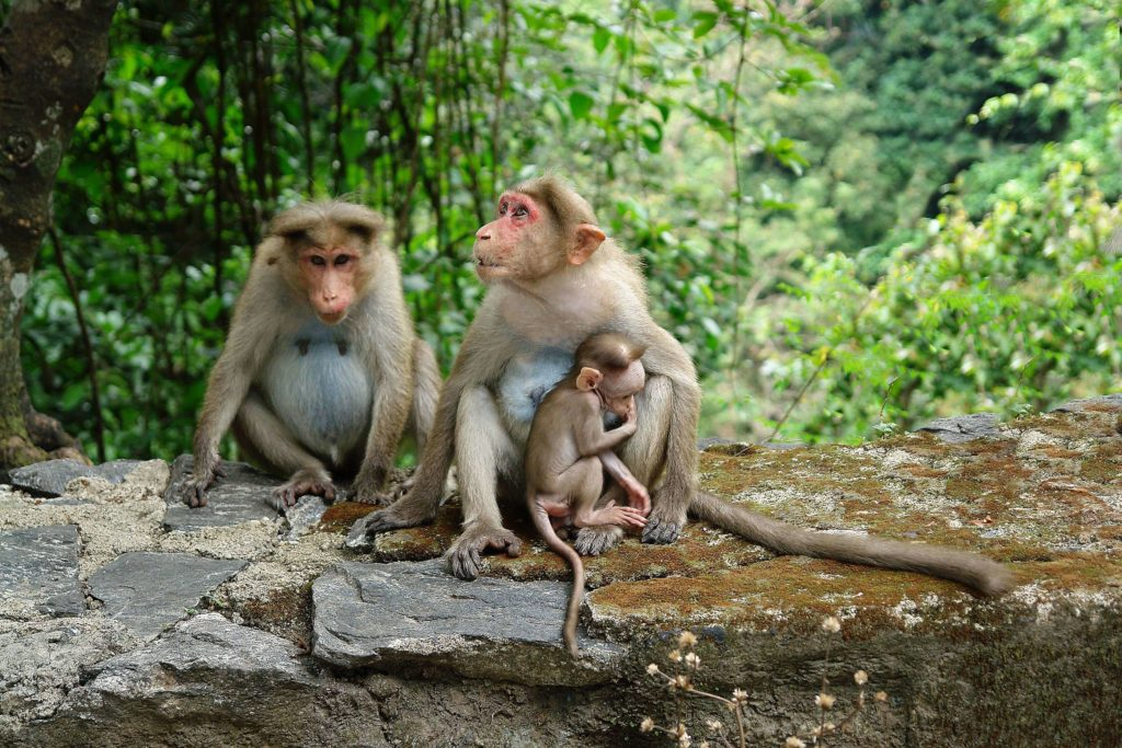 A family of primates