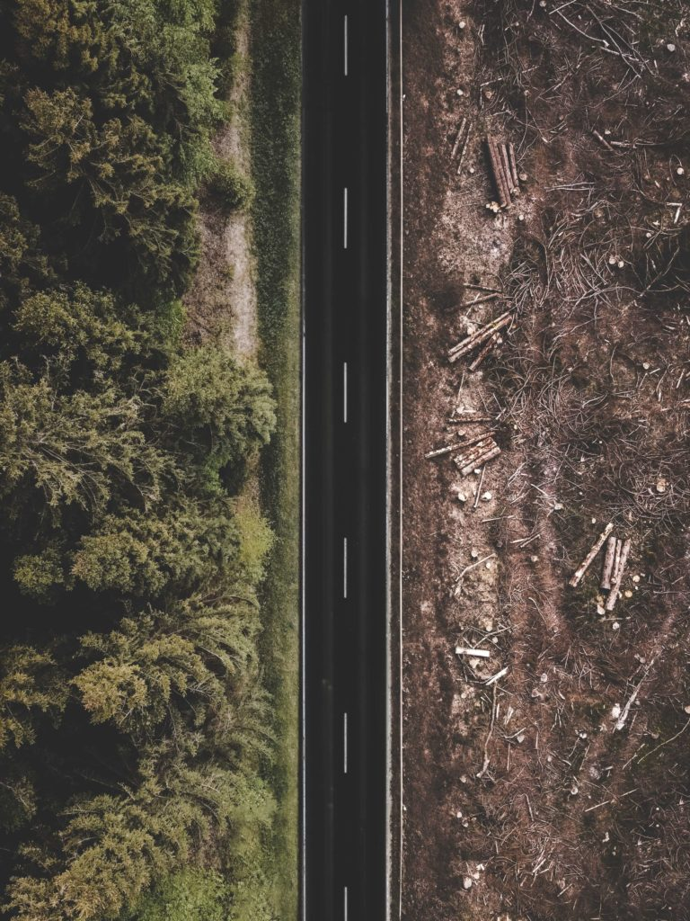 Deforestation on one side of a road and a forest on the other