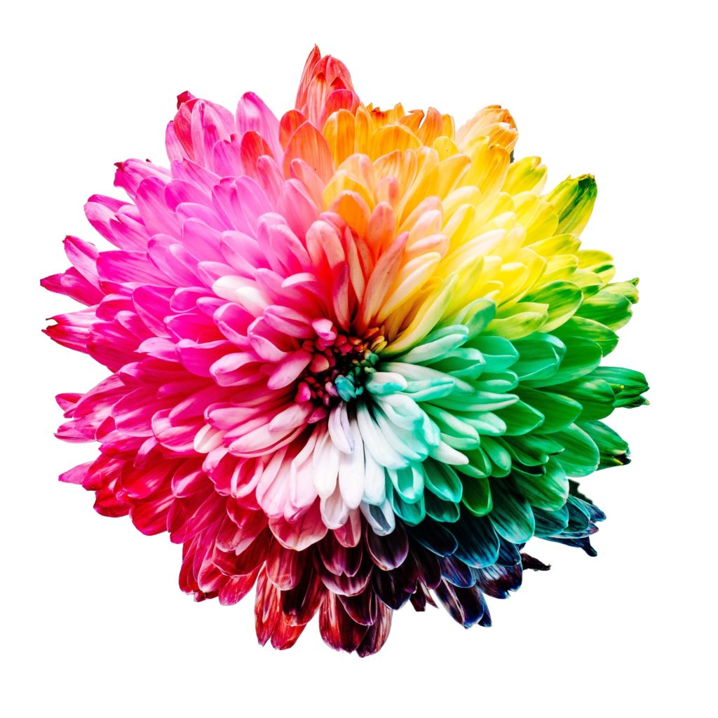 A flower representing the diverse colours of the chakras