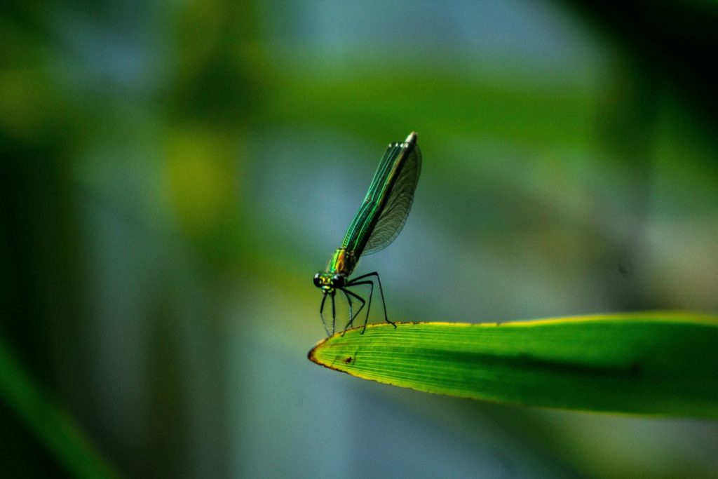 Photo of Dragonfly on green leaf. Photo by Akin Cakiner on Unsplash