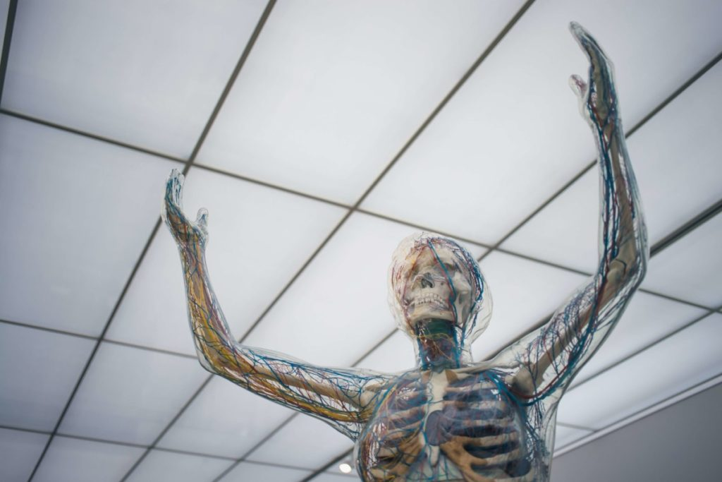 Image of skeleton reaching up, showing veins and muscles. Photo by camilo jimenez on Unsplash