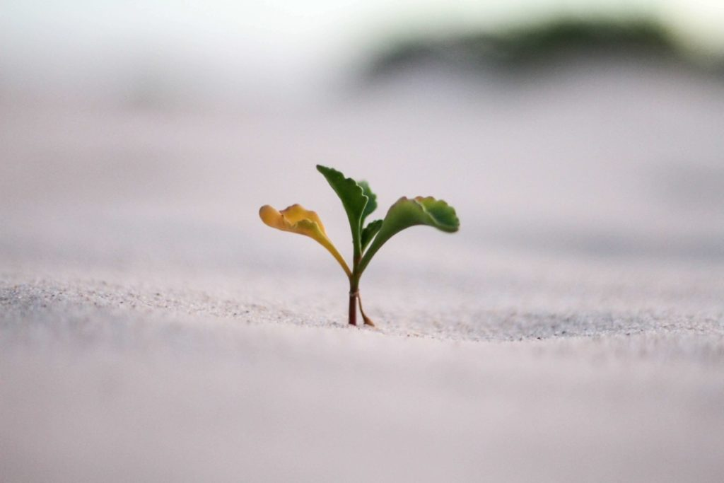 Leaves growing out of sand. Photo by Jeremy Bishop on Unsplash
