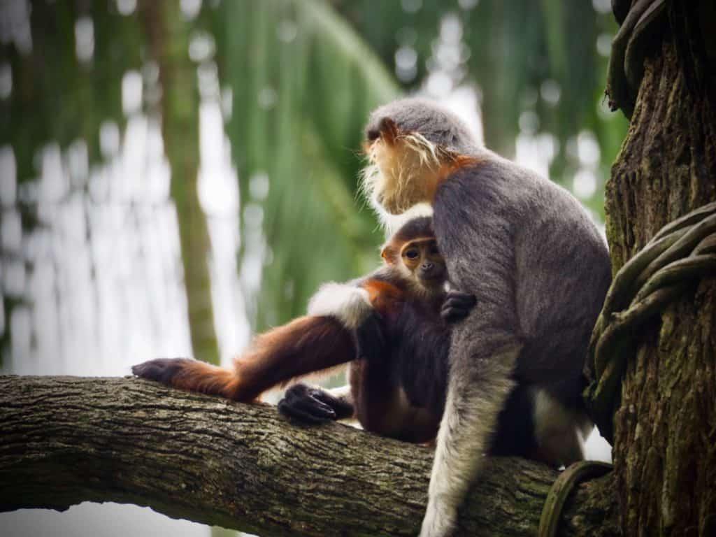 Monkeys in a tree. Photo by Jess Bailey on Unsplash
