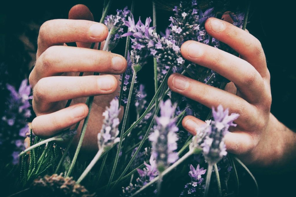 Hands holding lavender flowers. Photo by Vero Photoart on Unsplash