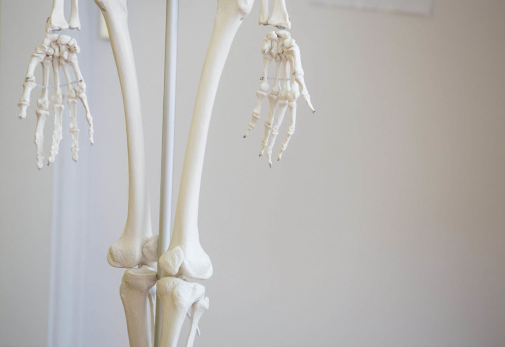 Yoga for runners session, picture of model skeleton