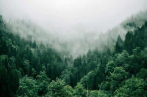 Tree reforestation benefits